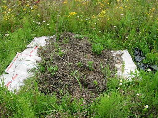 Огород на маленьком участке
